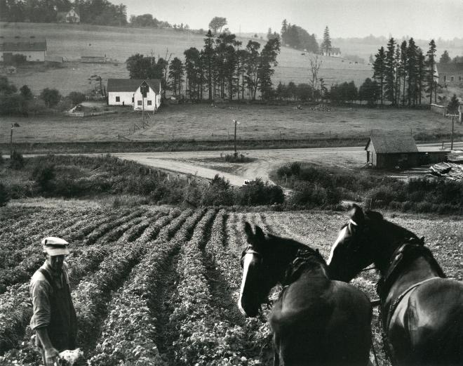 Karsh_Charlottetown, IPE, chevaux et fermier, 1953_p101