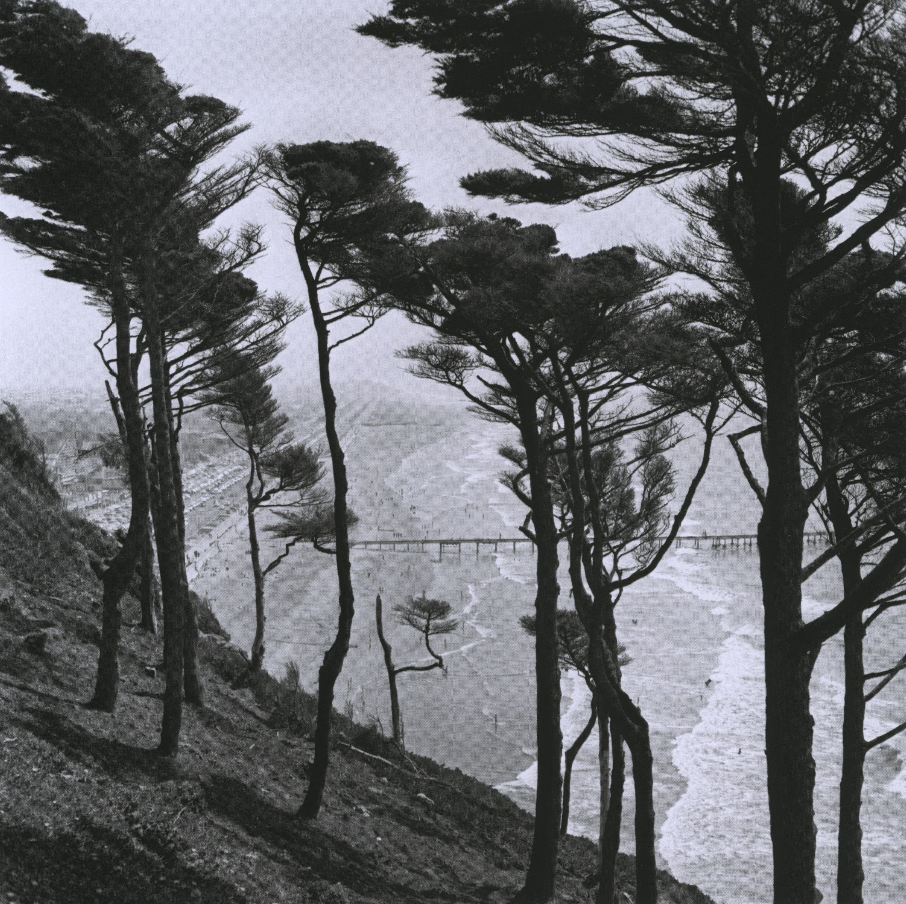 fred lyon_windswept trees above ocean beach_p48